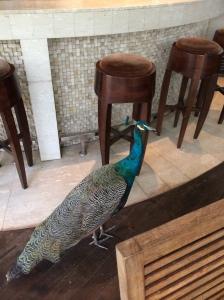 Shutters Peacock